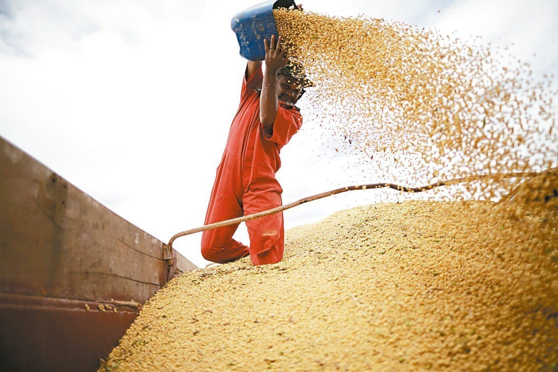 中國轉向巴西採購大豆,可能助長巴西森林濫砍濫伐,威脅亞馬遜熱帶雨林生態。 路透