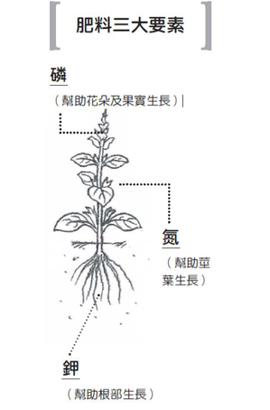 圖/摘自《種菜の趣味科學》