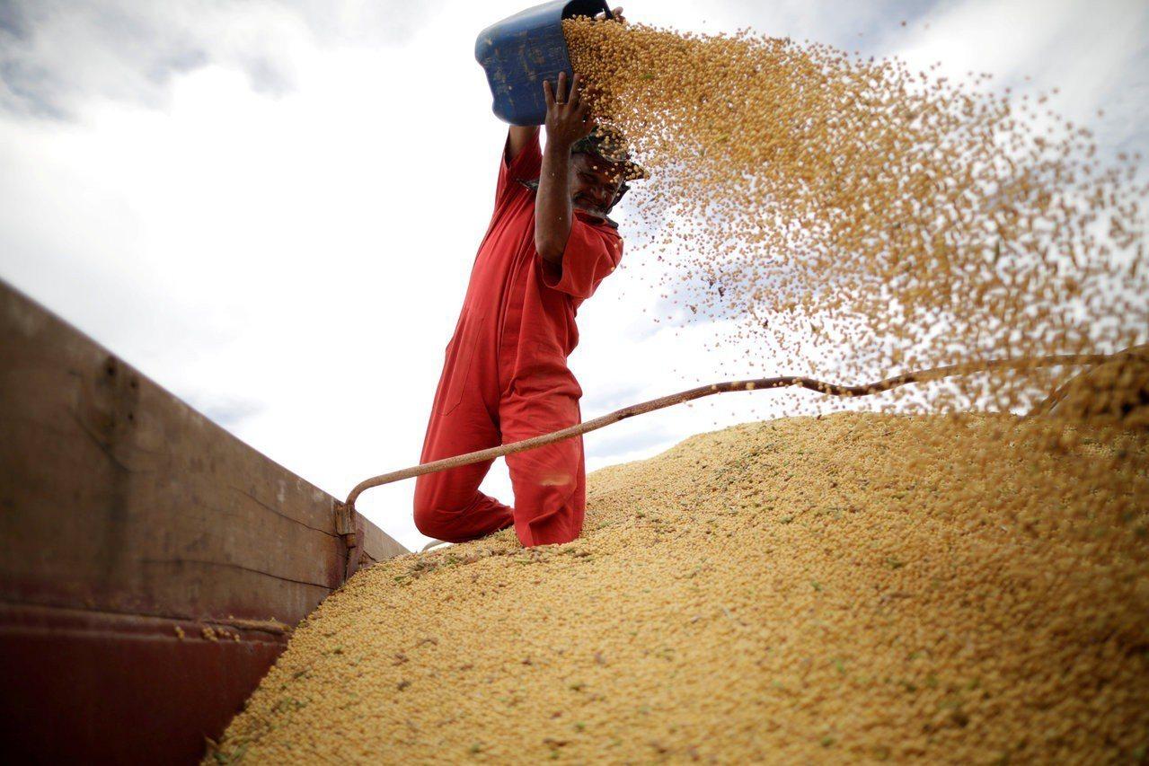 中國轉向巴西採購大豆,可能助長巴西森林濫砍濫伐,威脅亞馬遜熱帶雨林生態。路透
