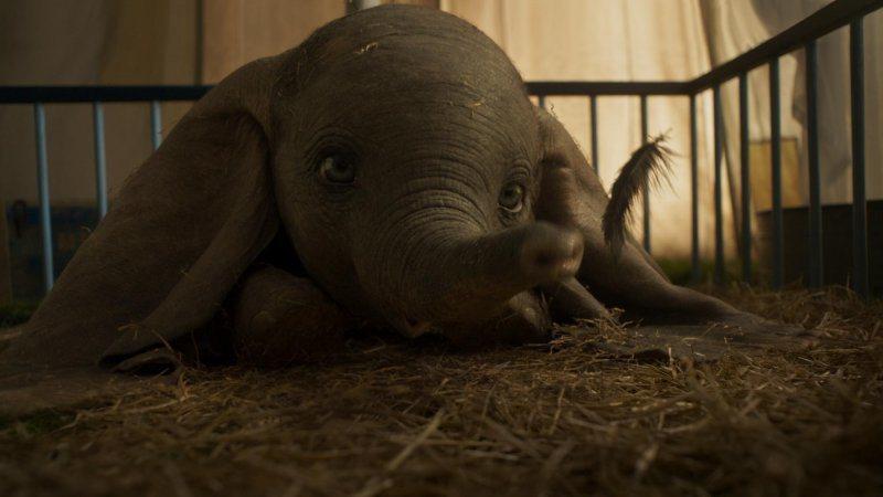 「小飛象」以栩栩如生的特效打造可愛小象。圖/迪士尼提供