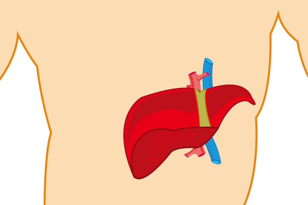 信不信由你,膽汁確實在身體維持窈窕上扮演重要角色。 圖/ingimage