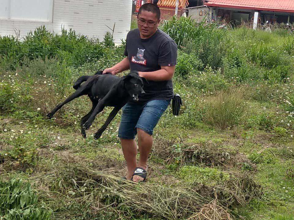 獨居老人侯德福養的2隻狗,等不到主人回家,不吃不喝,骨瘦如柴。圖/楊石旭提供