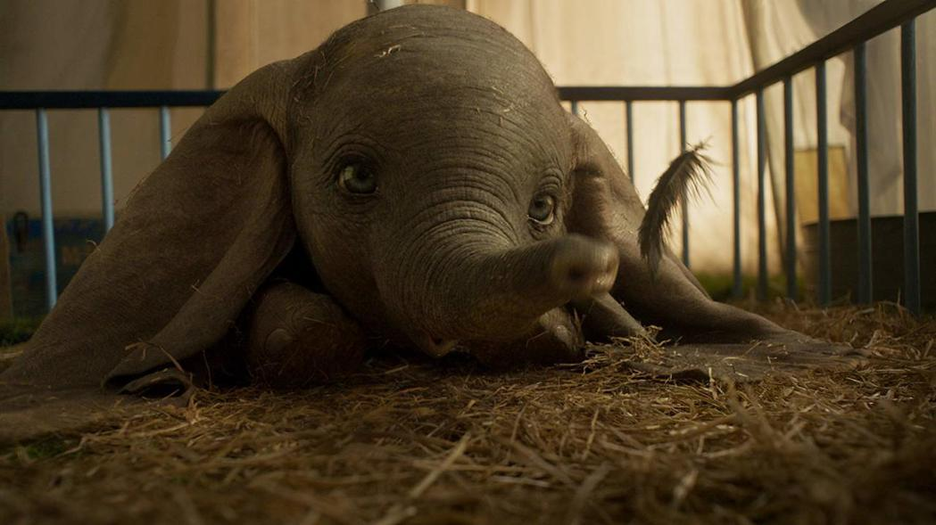 「小飛象」今年被重拍,更逼真的小象仍然相當可愛。圖/摘自imdb