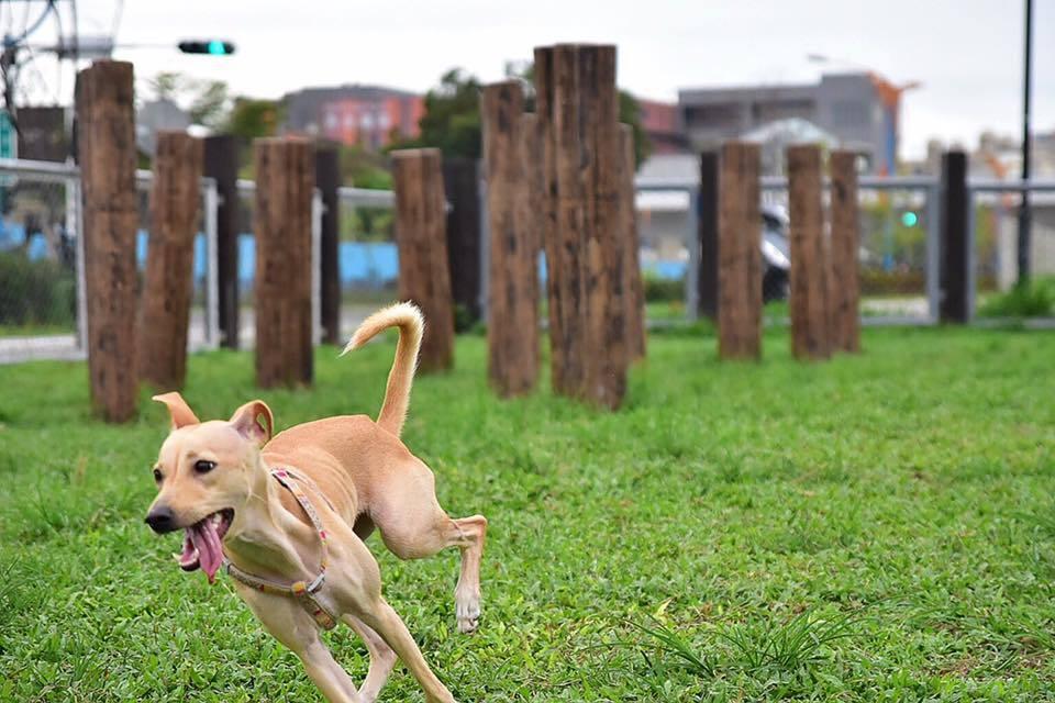 犬隻亂竄示意圖,非當事犬隻。圖/報系資料照