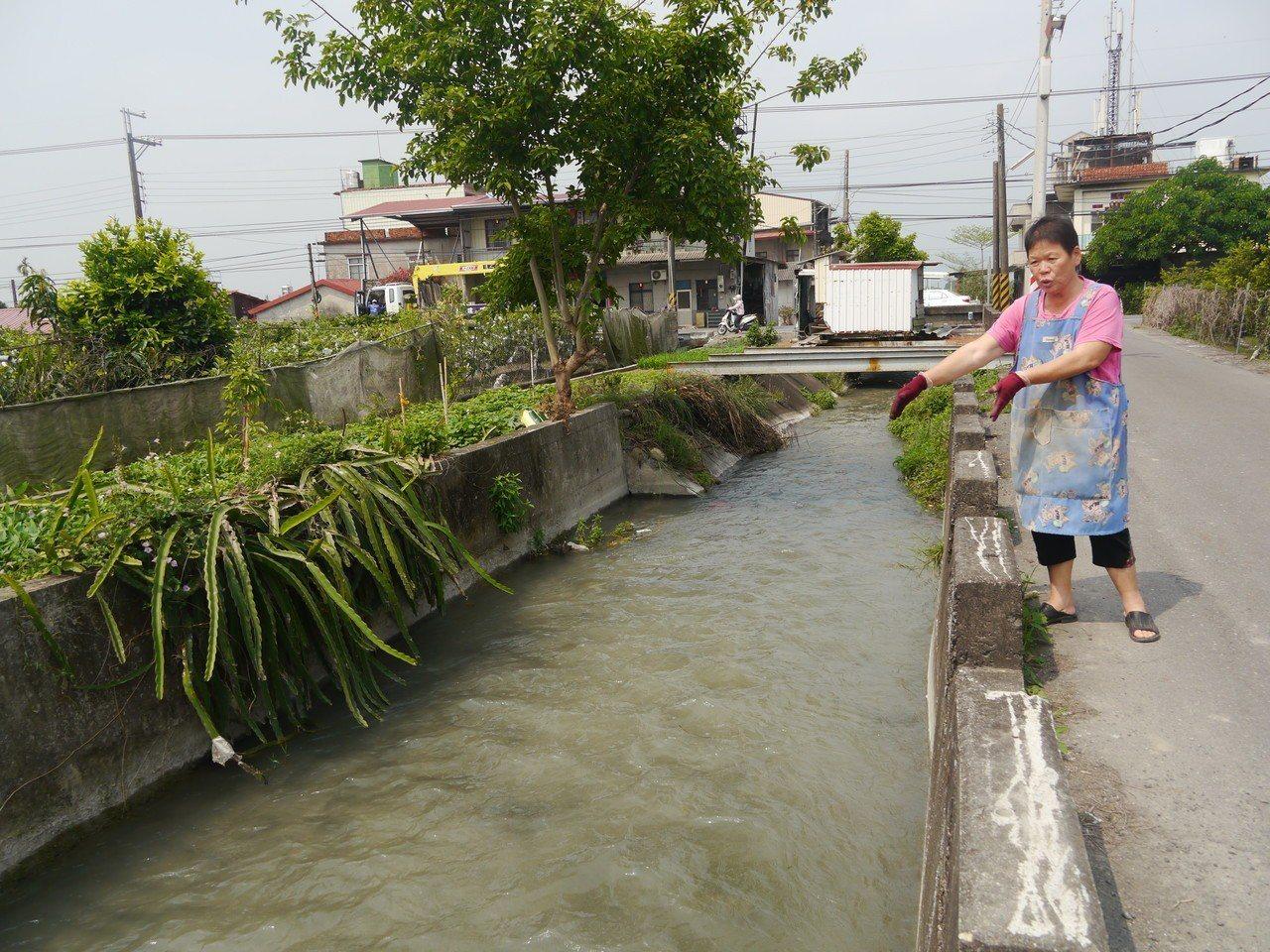昨天被拍到傾倒芭樂照片的水圳今天放水,灌溉水已經將芭樂沖往下游。記者徐白櫻/攝影
