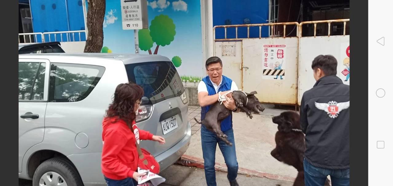新北市議員陳明義,帶著小豬到陸委會抗議。圖/記者廖炳棋攝影