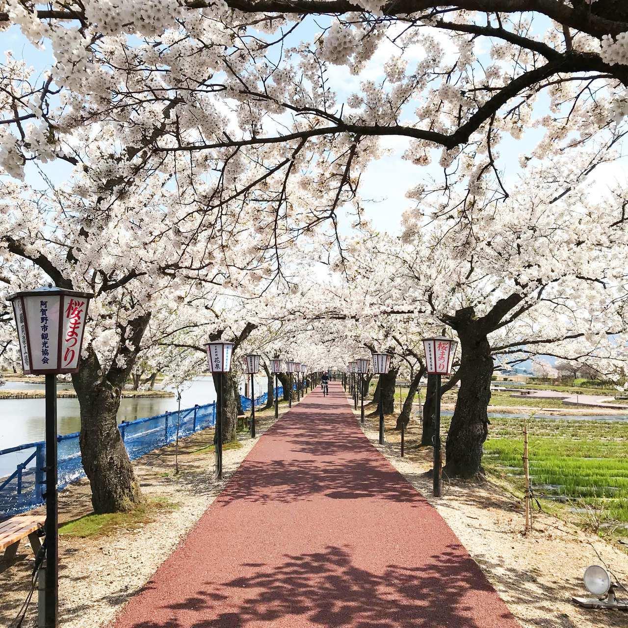 遠東航空獨家直飛桃園-新潟航班四月份起每周一、三、五出發,航班選擇更便利,只要三...