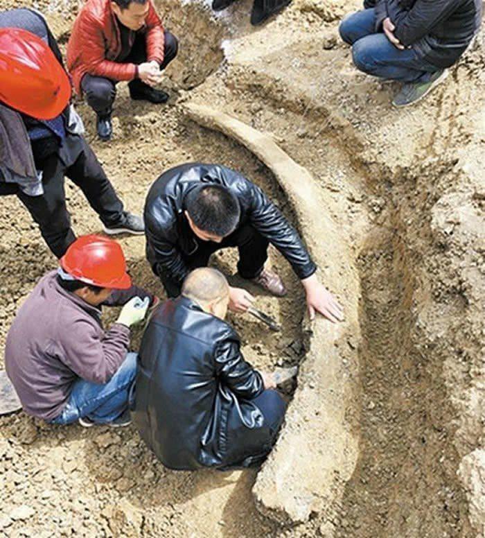 河南商丘日發掘一根完整象牙化石,推算距今已超過10萬年。(中新網)