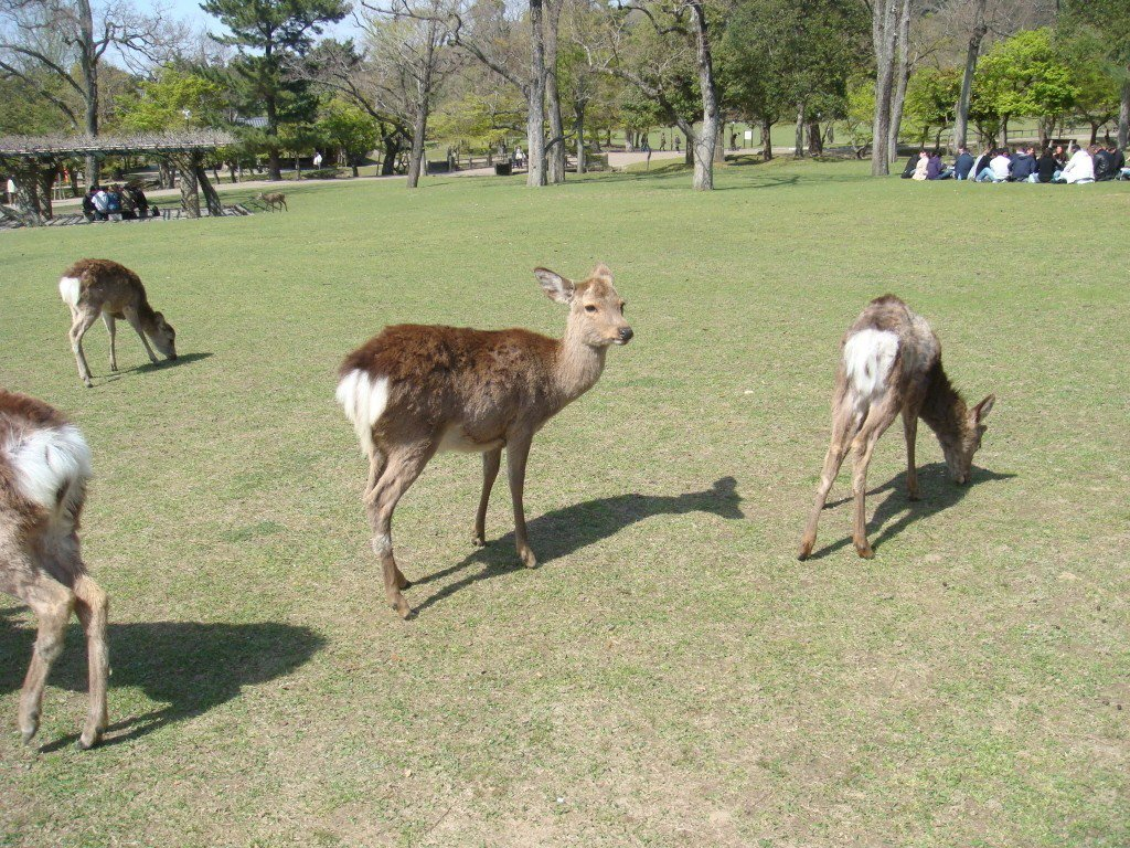 奈良公園。圖/聯合報系資料照片