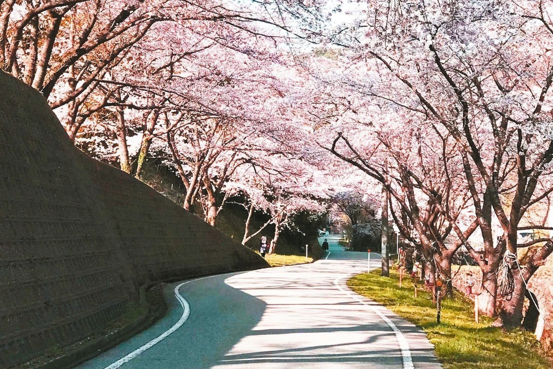相較日本知名賞櫻景點,新潟有多處的賞櫻秘境及特色景點,值得清明連假規劃一趟賞櫻之...