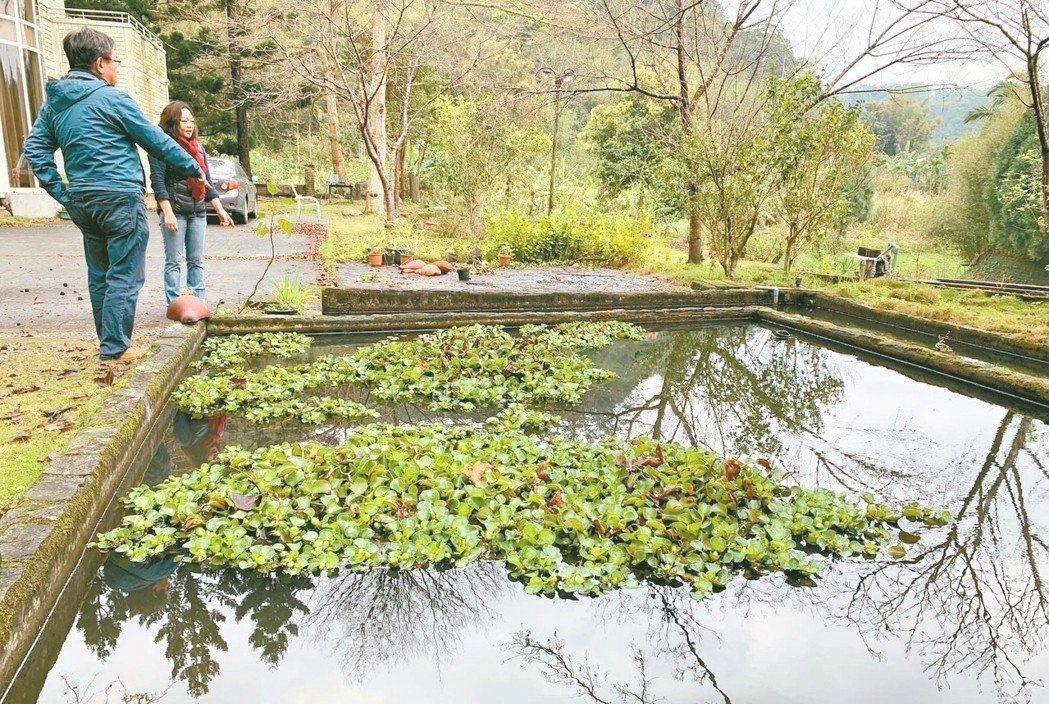 山泉水進到生態池後沉澱,經四個池子淨化,之後簡單過濾,就成涂月華家飲用水。 ...