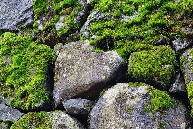 石垣上的「心」形石塊。