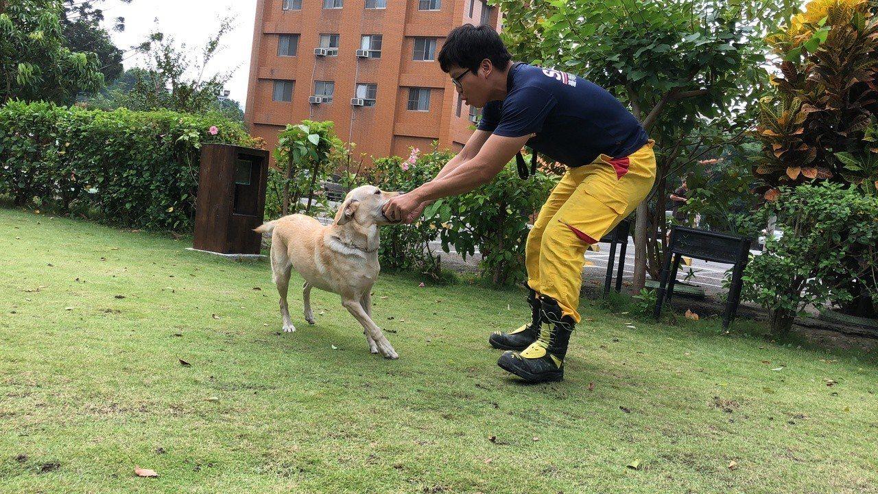 台南市消防局聘請物理治療師為搜救犬定期檢查及治療,民眾直呼「台南搜救犬好幸福!」...
