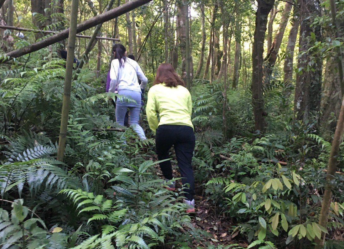 日前有3位民眾登山時發現野菇,用菇類鑑定APP鑑定後,認為該野菇是可食菇類,便採...