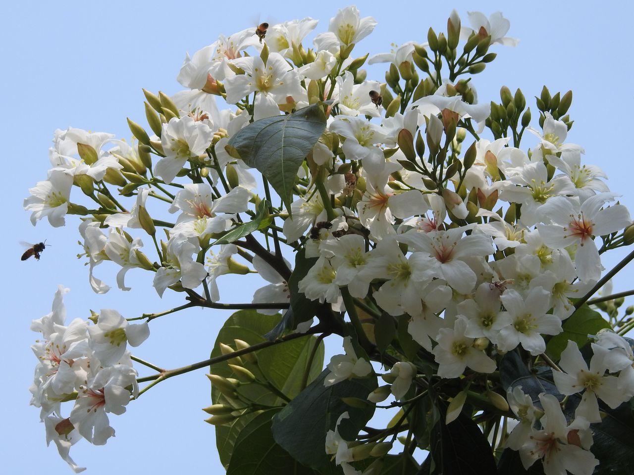每年4、5月是油桐花盛放期,今年因暖冬且上周一波及時雨,南投縣整體花況可望較往年...