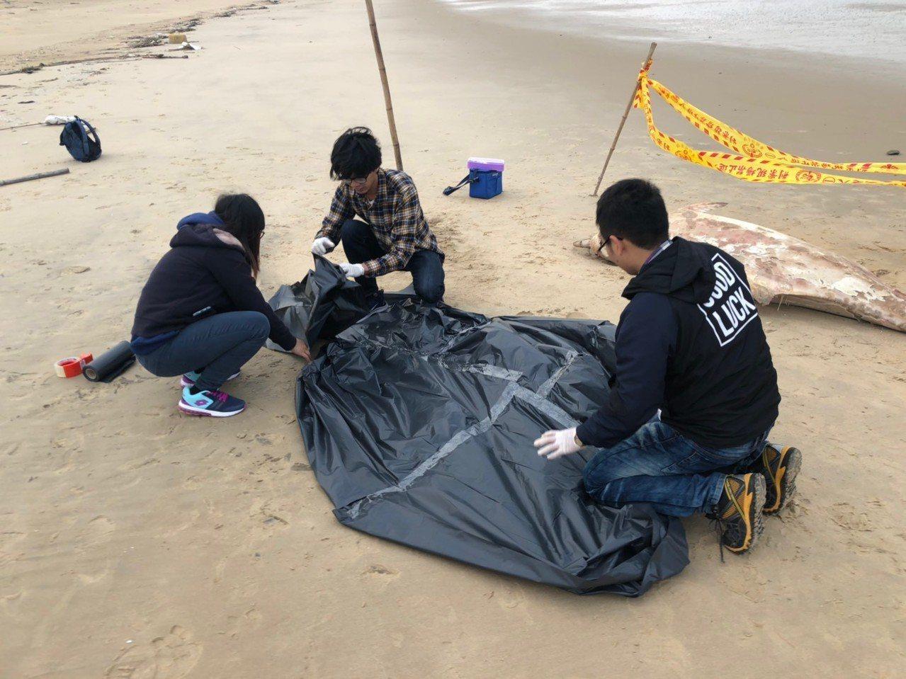 金馬澎分署第九岸巡隊復國墩安檢所執勤人員昨日在金門縣金沙鎮E54據點岸際發現1隻...