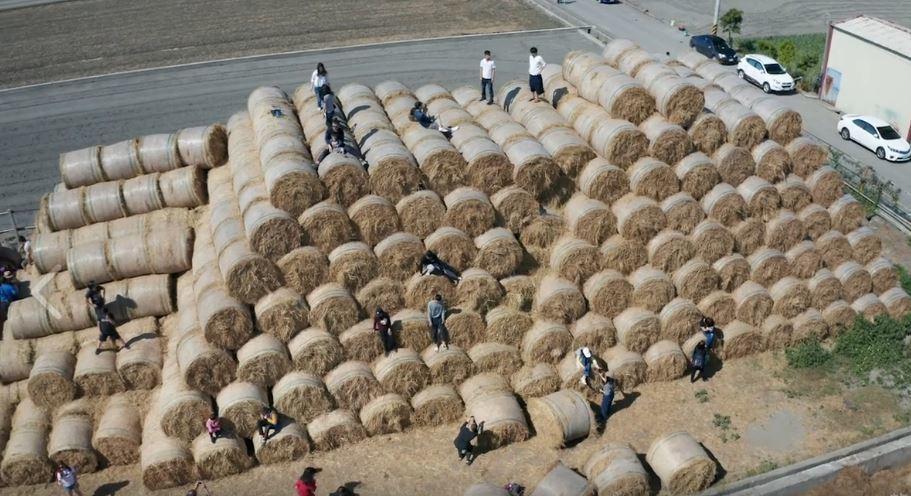 雲林虎尾鎮蘑菇農場將上千捆稻草捲堆積成山。 圖╱取自稻草捲心酥臉書