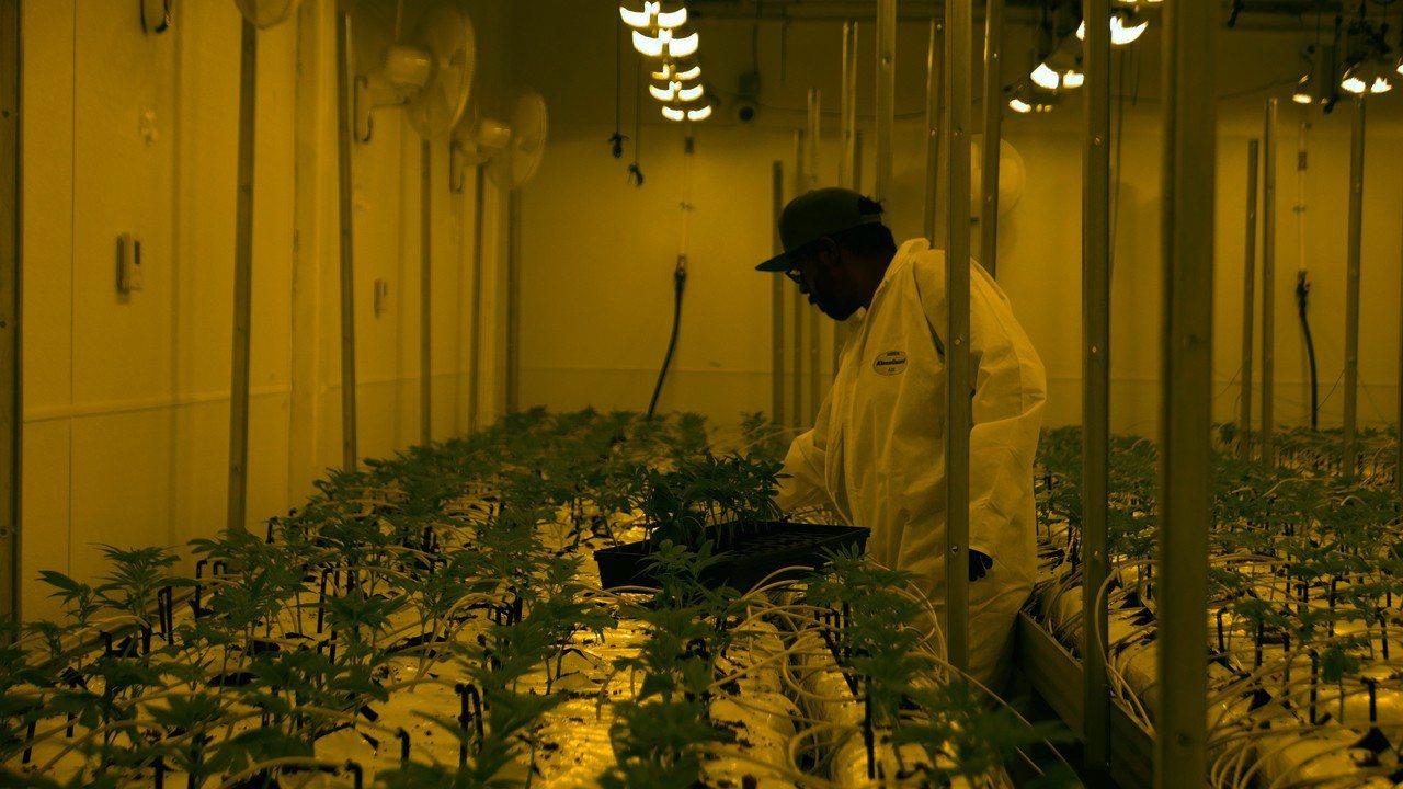 大麻詐騙案