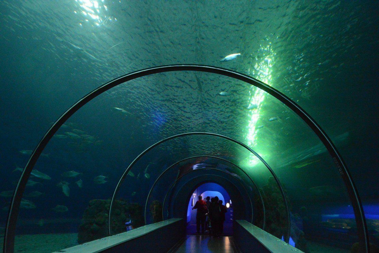 澎湖水族館重新開幕,規畫4大區域讓遊客體會澎湖美麗的海底世界。圖/澎湖縣政府提供