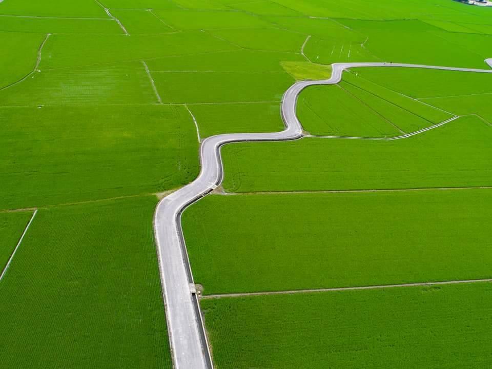 被稱為「宜蘭伯朗大道」的冬山鄉稻間美徑,秧田新綠,鄉公所的空拍照曝光,真的是又美...