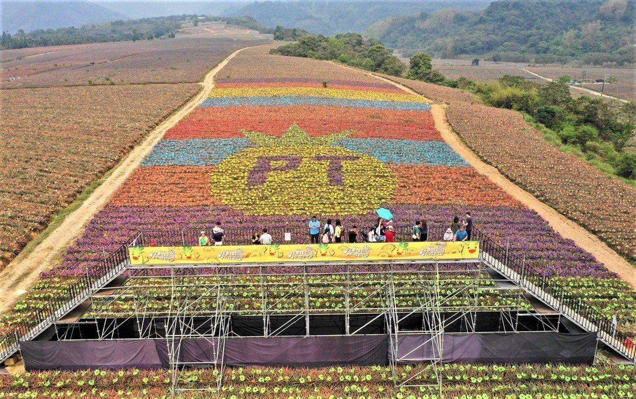 屏東縣政府與高樹鄉農民合作,為7萬多顆鳳梨分別戴上不同顏色的帽子,在遮陽防曬傷外...