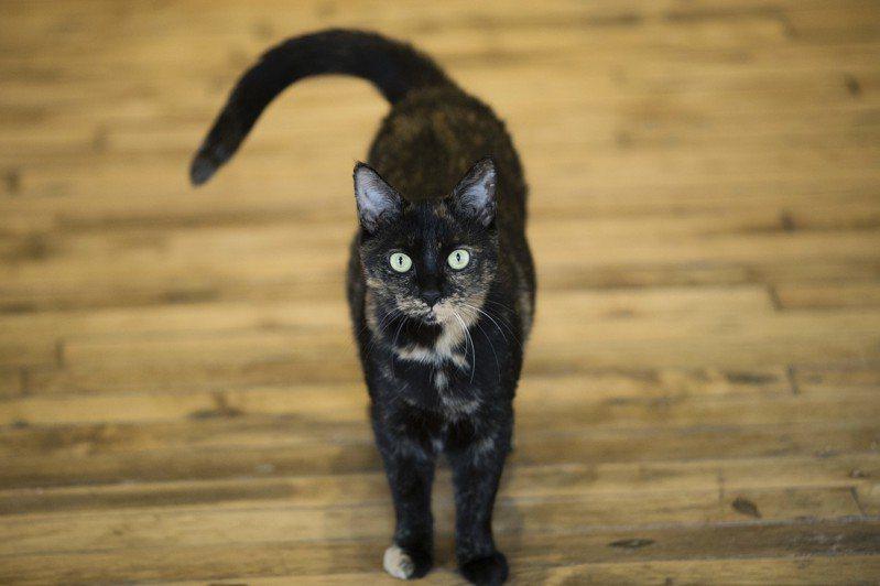 科學研究發現貓咪可以辨識自己的名字跟其他的名詞之間的差異。美聯社