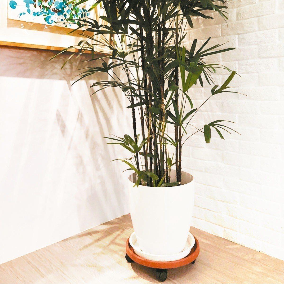 居家照顧植栽轉盆、搬運都可省力的Flower Roller移動式盆栽座。 圖/韋...