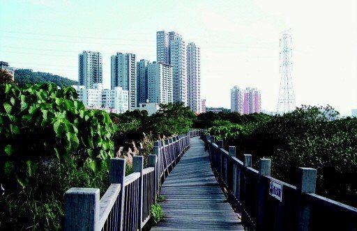 生態景觀和自行車道是淡水竹圍、紅樹林一帶的寶貴資產,新北市府計畫打造淡水竹圍地區...