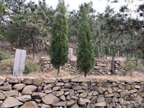 嶗山區民政局統計,散佈山區、林地有600多處、6萬多座非法墳墓,因為砍伐樹木毀山...