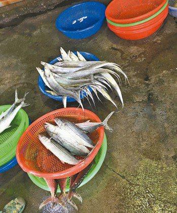 動作太慢,好魚都在別人的籃子裡。 圖╱朱慧芳