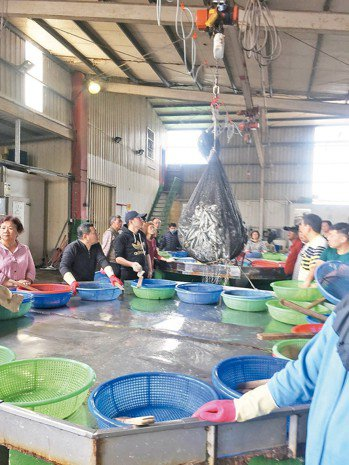 成千魚隻從天而降,眾人準備開搶! 圖╱朱慧芳