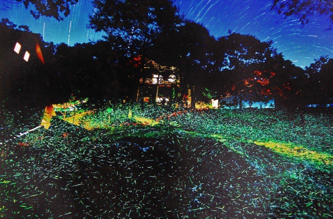 瑞里「遇見彩虹」螢火蟲保育區,預估未來1周將出現10萬隻以上螢火蟲。資料照片/遇...