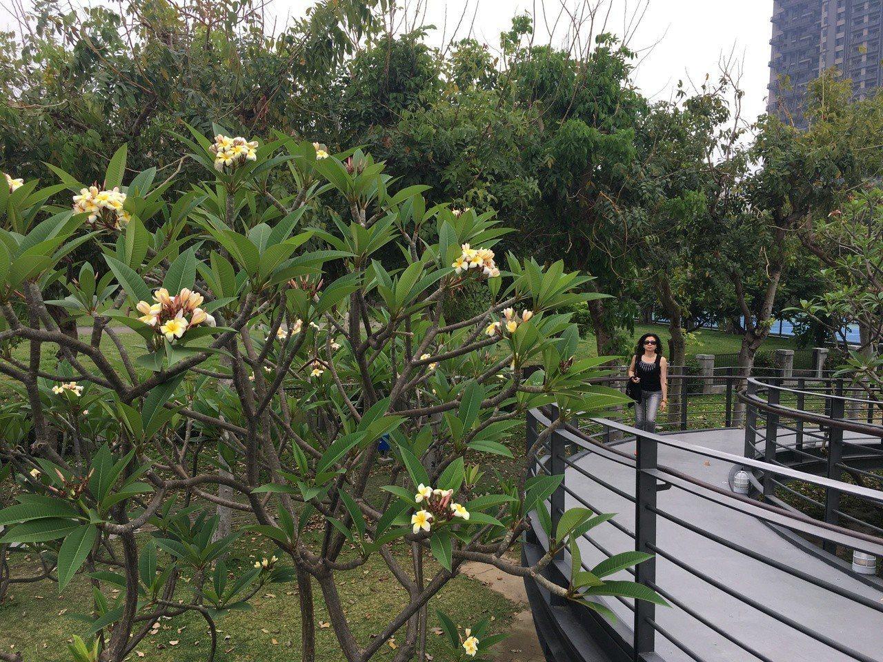 台中國立台灣美術館後門有人行通道,沿途花樹豐美。記者何定照/攝影