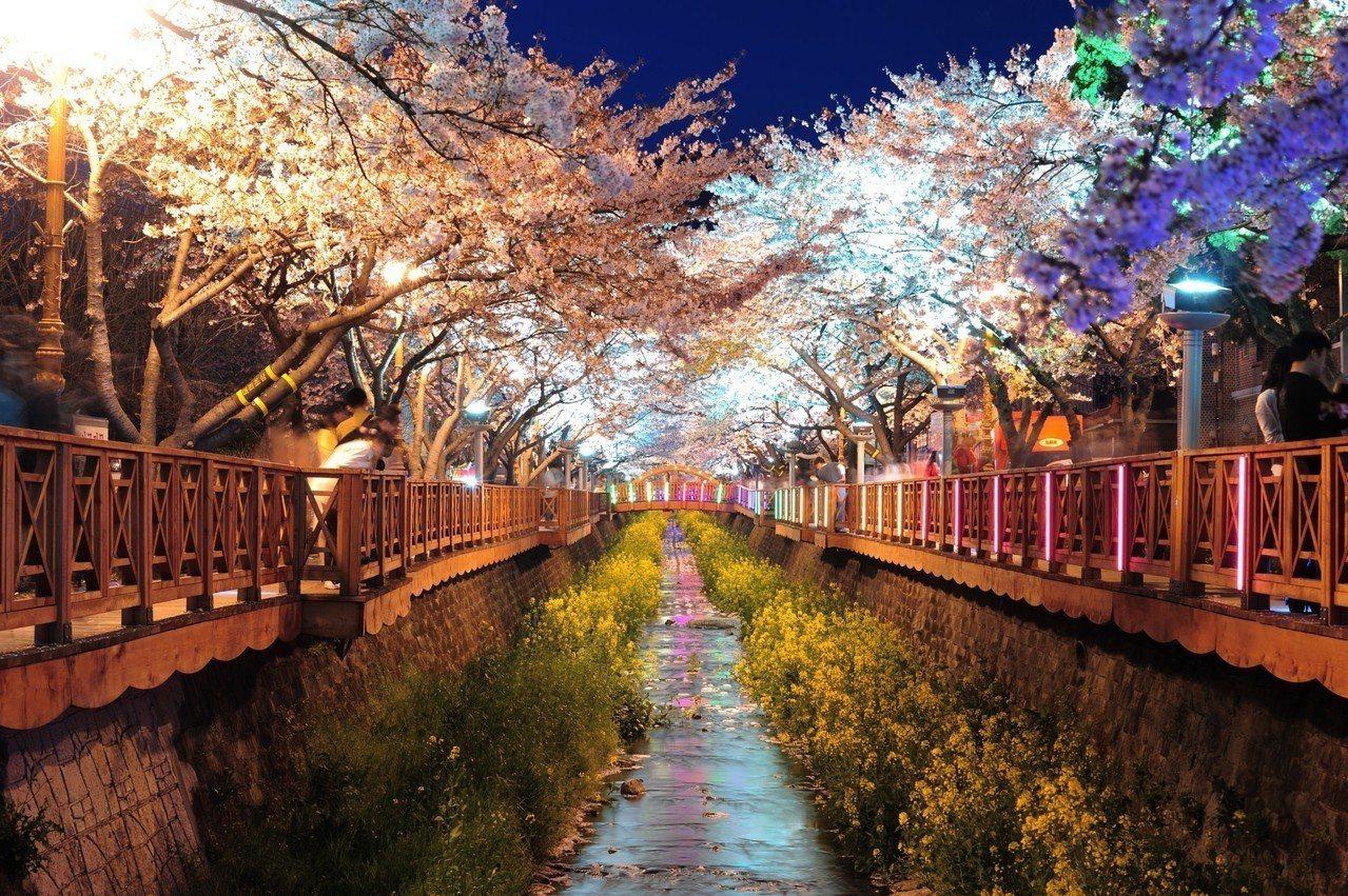 余佐川夜櫻。圖/韓國觀光公社提供