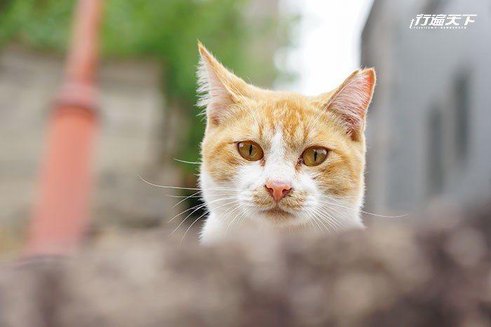 ▲鏡頭捕捉到一隻探頭探腦的貓,幸好在愛貓人天堂,好奇心不會殺死貓。