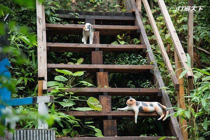 ▲貓の細道除了園山春二的福石貓之外,還能隨處可見「活生生」的貓裝置藝術。