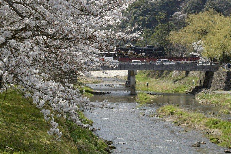 SL山口線,以有貴婦人稱號的蒸汽火車行駛在JR新山口站和津和野站之間。