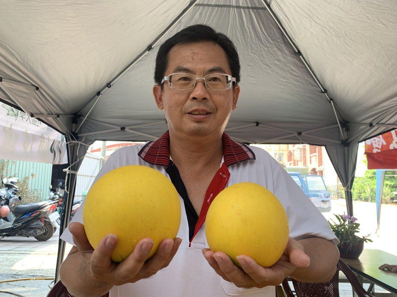 龔泰安種的黃金果是一般果實的好幾倍大。記者翁禎霞/攝影