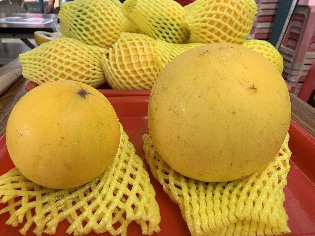 這顆超大黃金果(右)可達兩台斤重,一顆就可以賣到400元。記者翁禎霞/攝影