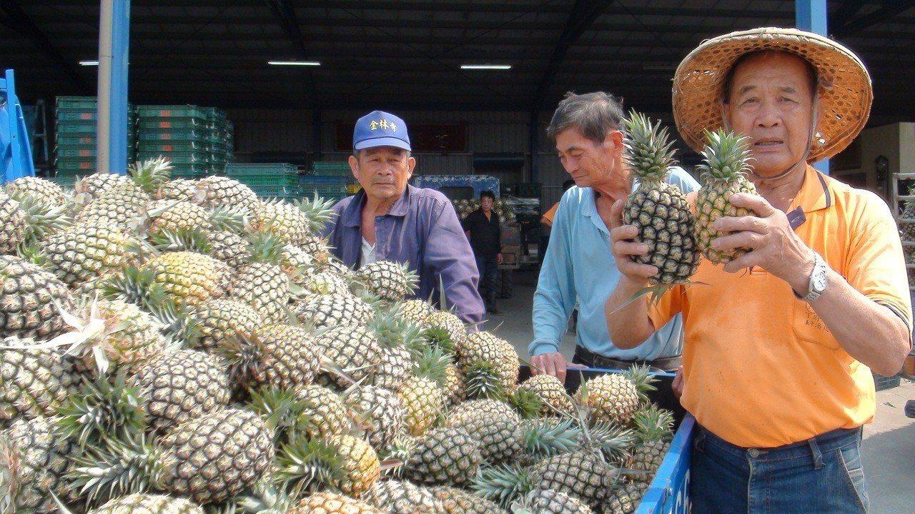農民表示產地價略漲,但價格仍不好,部分只好交加工收購。記者謝恩得/攝影