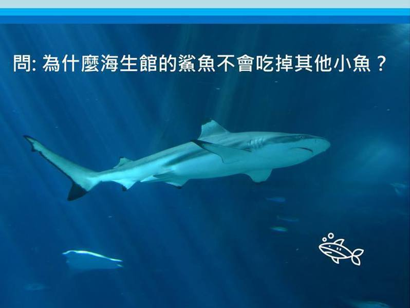 圖片來源/國立海洋生物博物館粉專