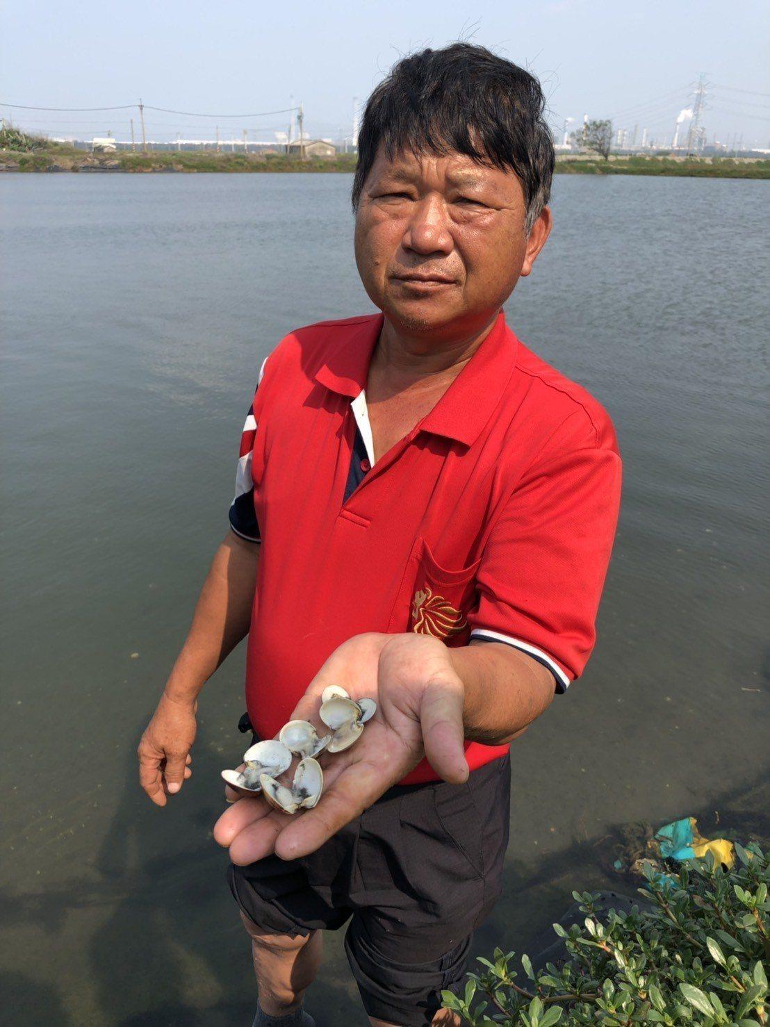 麥寮養殖業者林平來無奈指出,他的文蛤大量死亡。記者李京昇/攝影