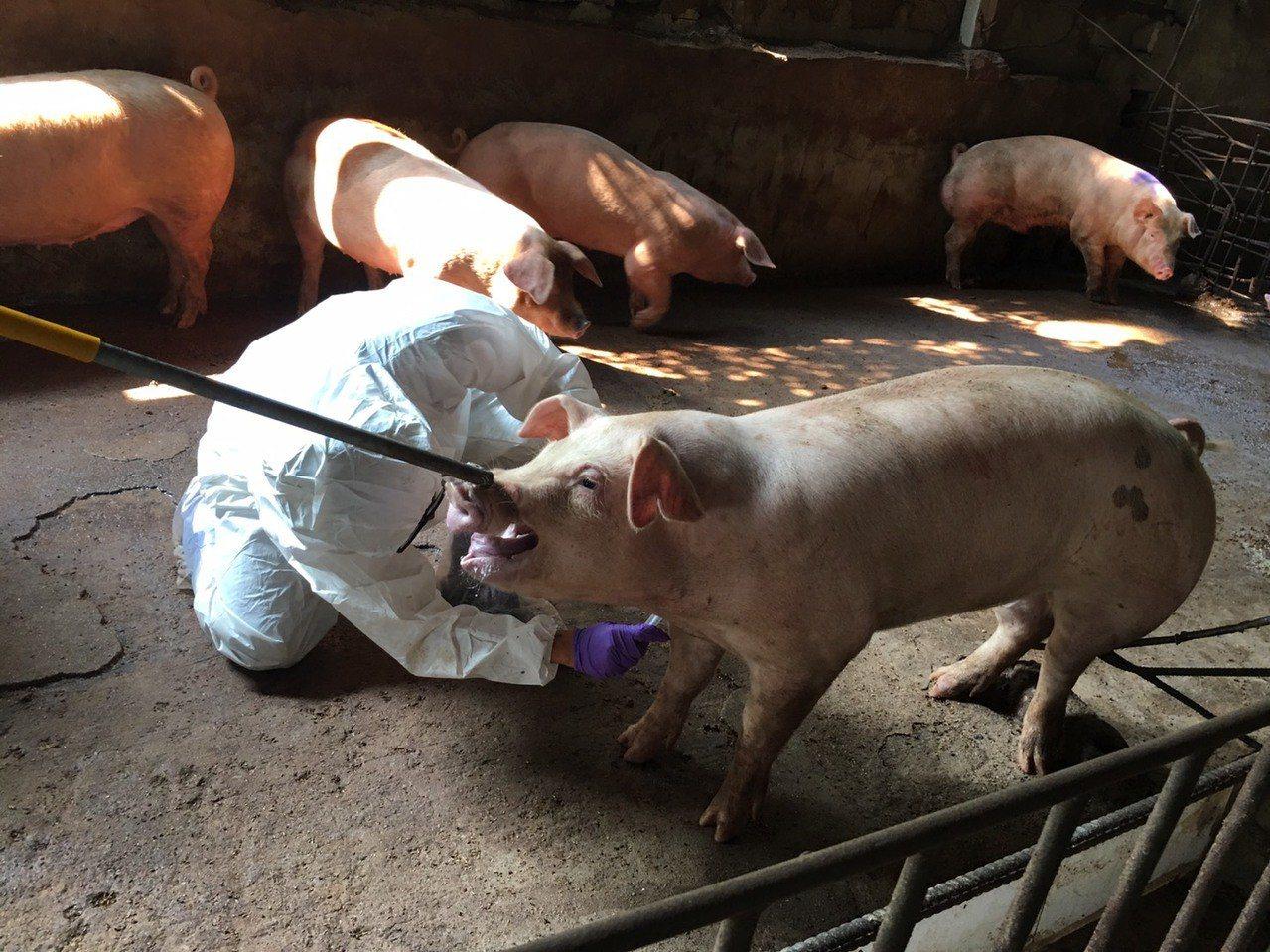 縣府派員至海漂豬的發現周邊進行檢查。圖/縣府提供