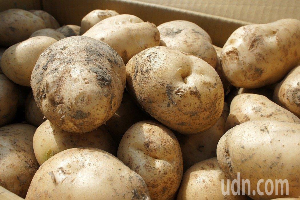 馬鈴薯變綠色,不代表顏色愈綠愈毒,兩者無法畫上等號。本報資料照片