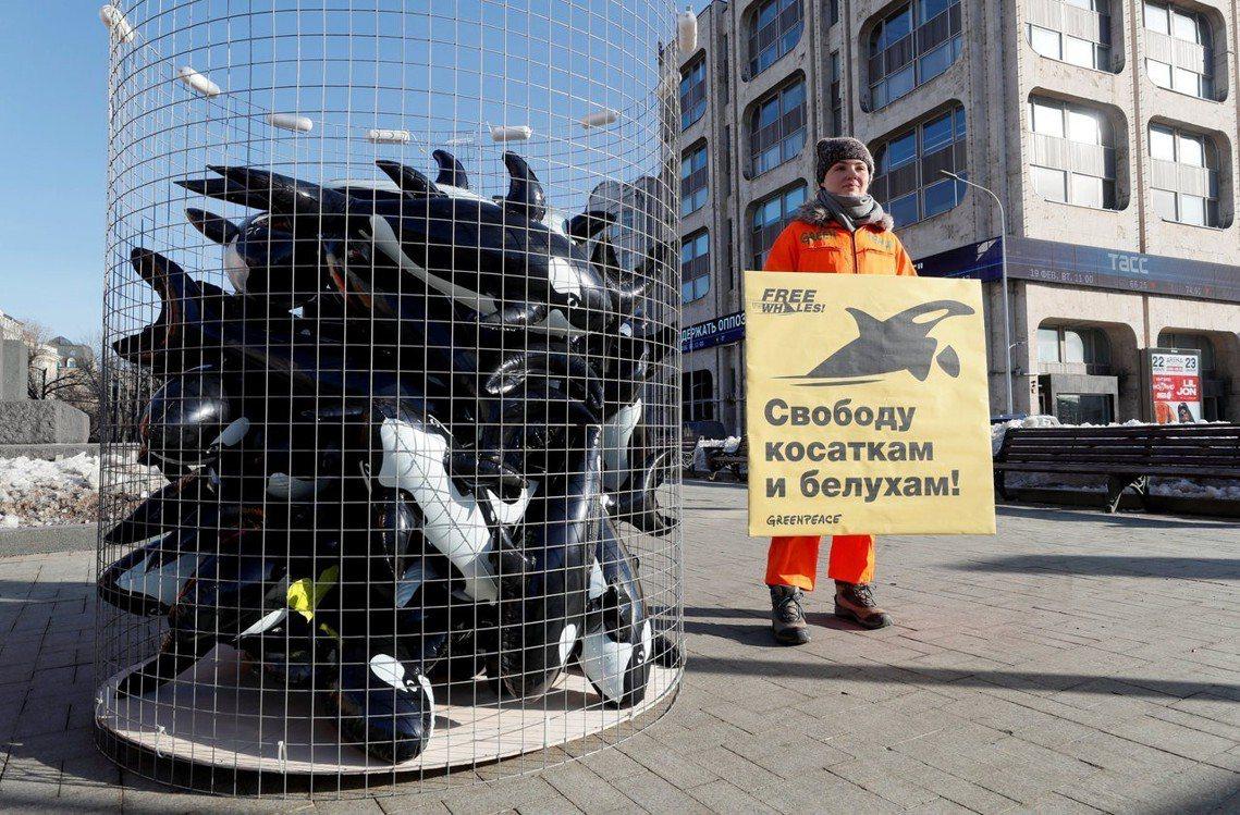 綠色和平組織運動人士,在莫斯科抗議「鯨魚監獄」,要求放生。 圖/路透社