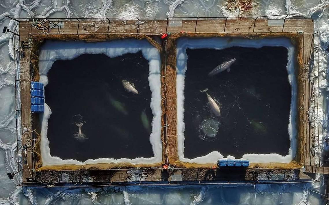 俄羅斯遠東納霍德卡(Nakhodka),惡名昭彰的「鯨魚監獄」。 圖/法新社