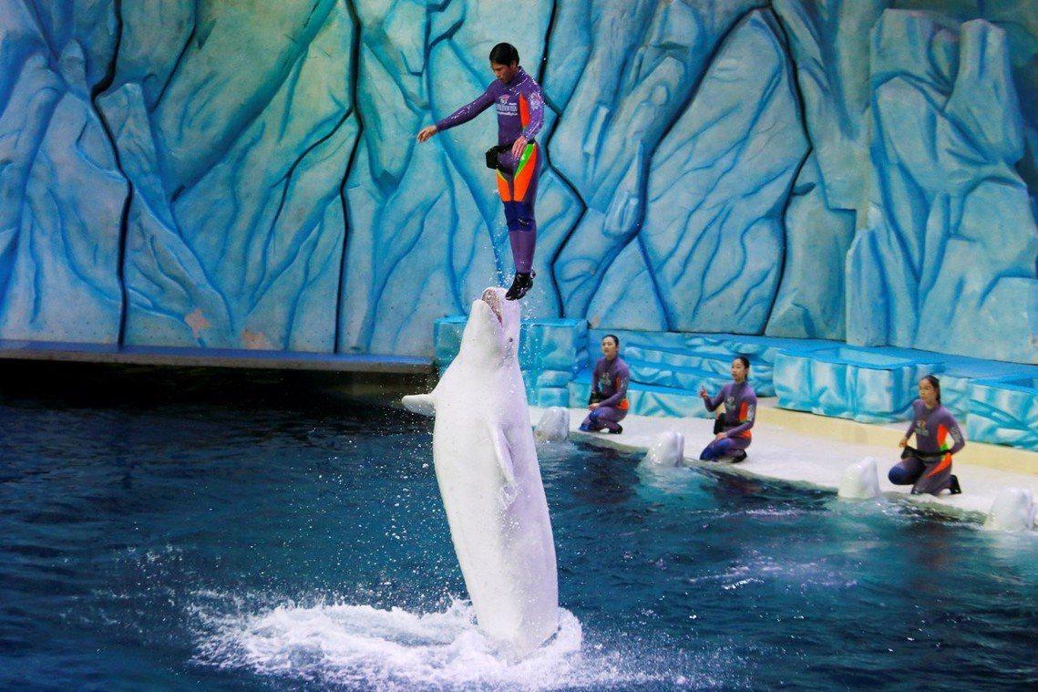 中國近年海洋主題樂園以及海生館的建設興起,對於鯨豚類的進口需求也增加。自2013...