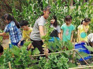 在菜圃採收蔬菜,也是課程的一部分 (圖/博嘉實小)
