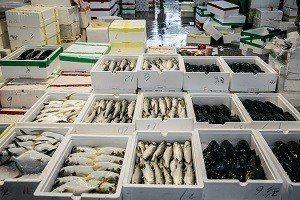 一箱箱新鮮又透亮的魚貨 (攝影/汪正翔)