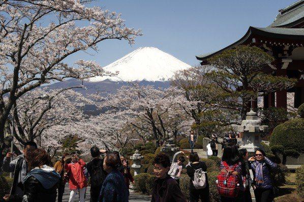 又到了櫻花怒放的季節,日本關西大學預估,今年海內、外將有6,300萬名觀光客湧入...